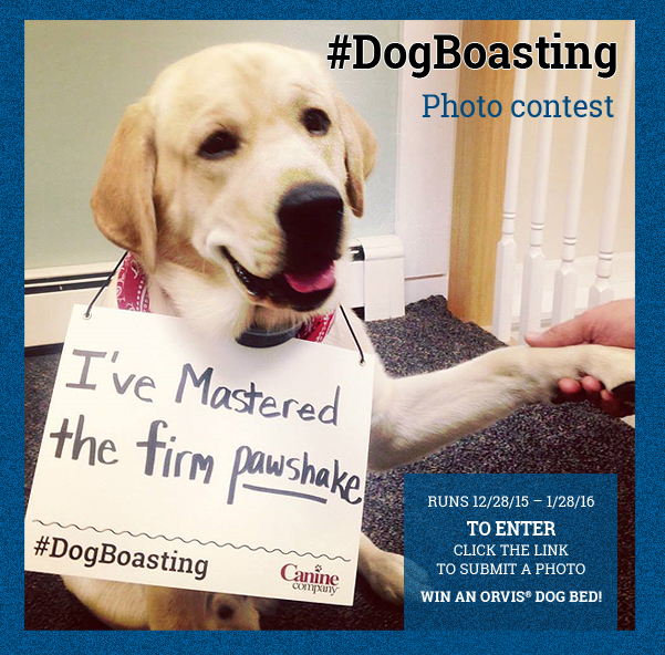 #DogBoasting Photo Contest - logo