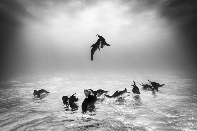 1st Place Winner – Wildlife Photographer of the Year 2015 – Sea Lions at Espiritu Santo by Christian Vizl