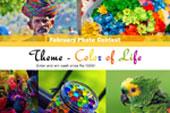 Klickideas – Theme – Color of Life - logo