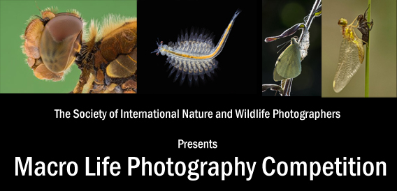 Macro Life Photography Competition - logo