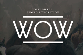 The 9th Annual Worldwide WOW Photo Contest - logo