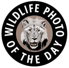 2016 Wildlife Photo Contest - logo