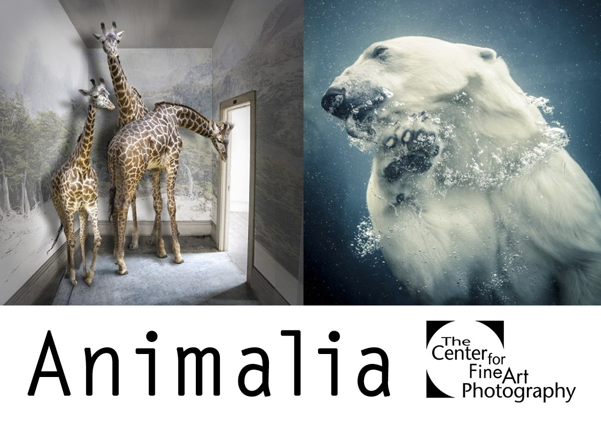 Animalia | INTERNATIONAL PHOTO CALL FOR ENTRY - logo
