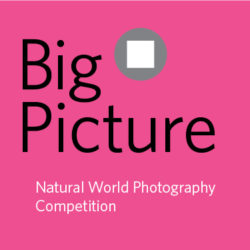 BigPicture Natural World Photography Competition - logo