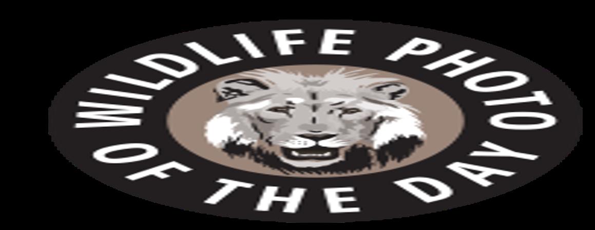 2017 Wildlife Photo Contest - logo