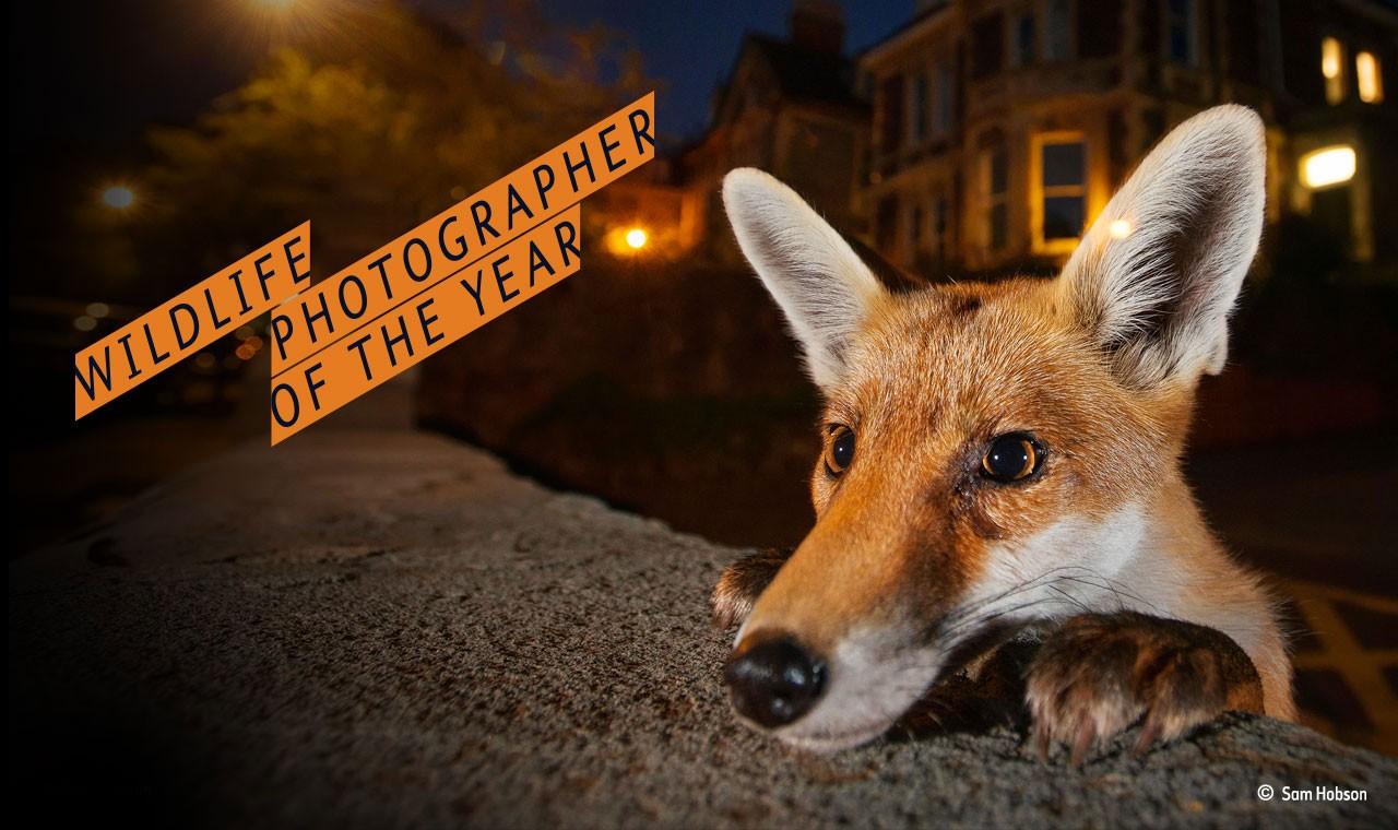 Wildlife Photographer of the Year 2017 - logo