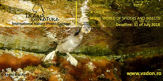 V. TransNatura International Nature Photo Contest - logo