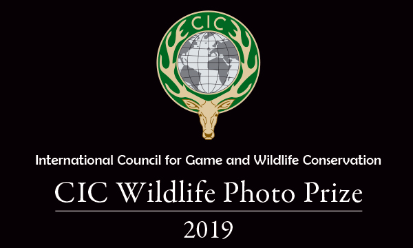 CIC Wildlife Photo Prize 2019 – ready, steady, shoot! - logo
