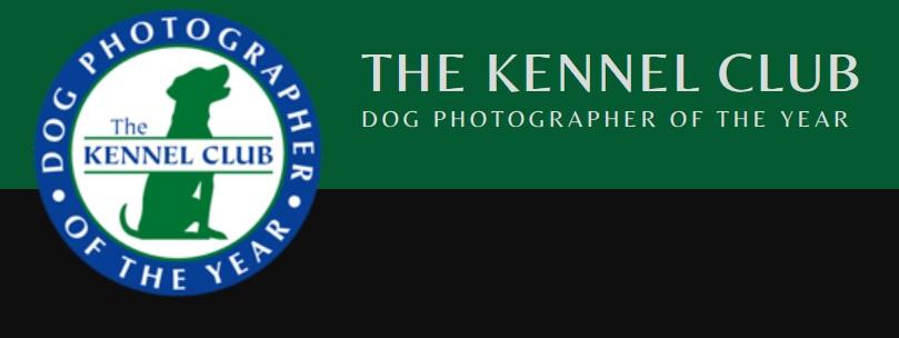 Dog Photographer of the Year 2019 - logo