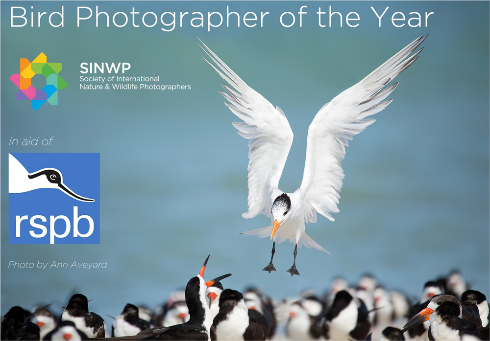 SINWP Bird Photographer of the Year 2019 in aid of RSPB - logo