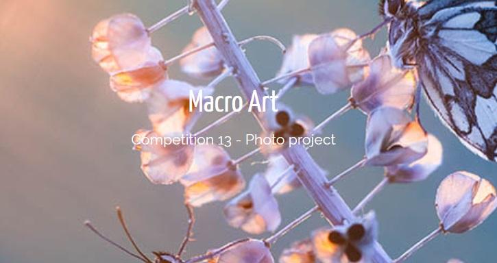 Macro Art Competition – IGPOTY 2019 - logo