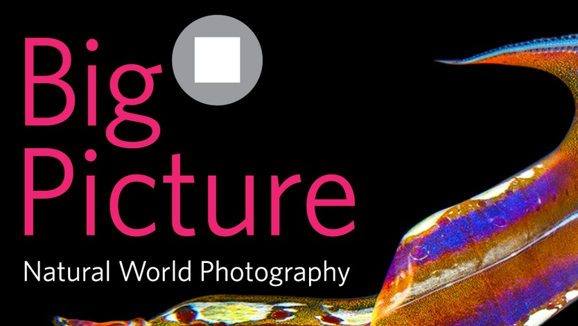 BigPicture Natural World Photography Competition 2020 - logo