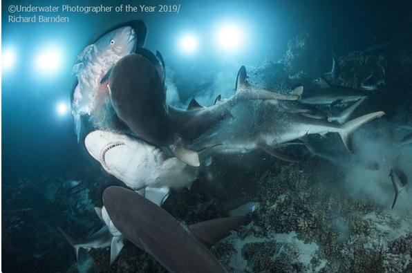 Underwater Photographer of the Year 2020 - logo