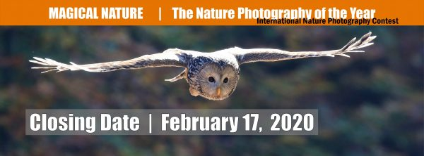 Magical Nature - Nature Photography of the Year