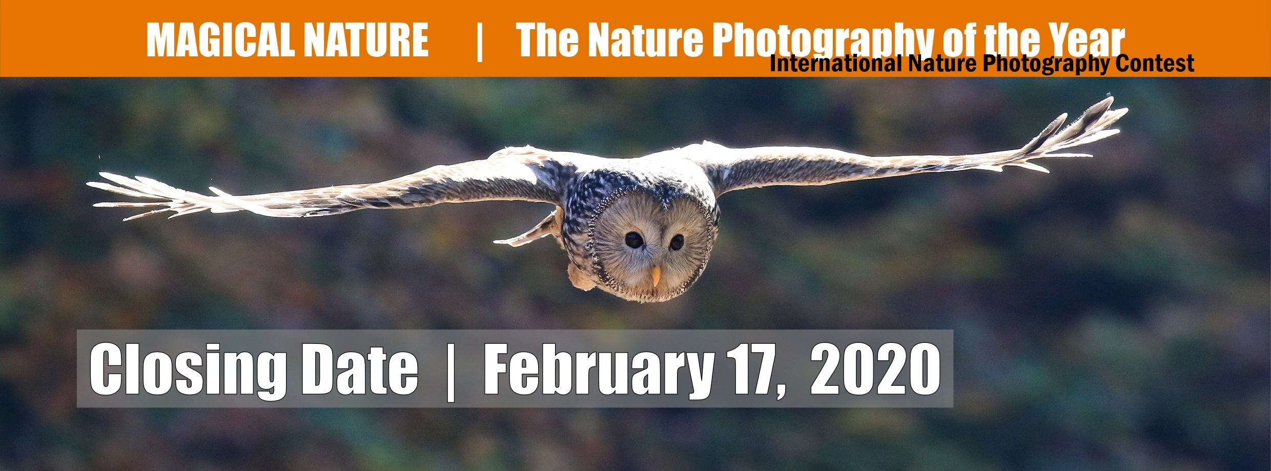 Magical Nature – Nature Photography of the Year - logo