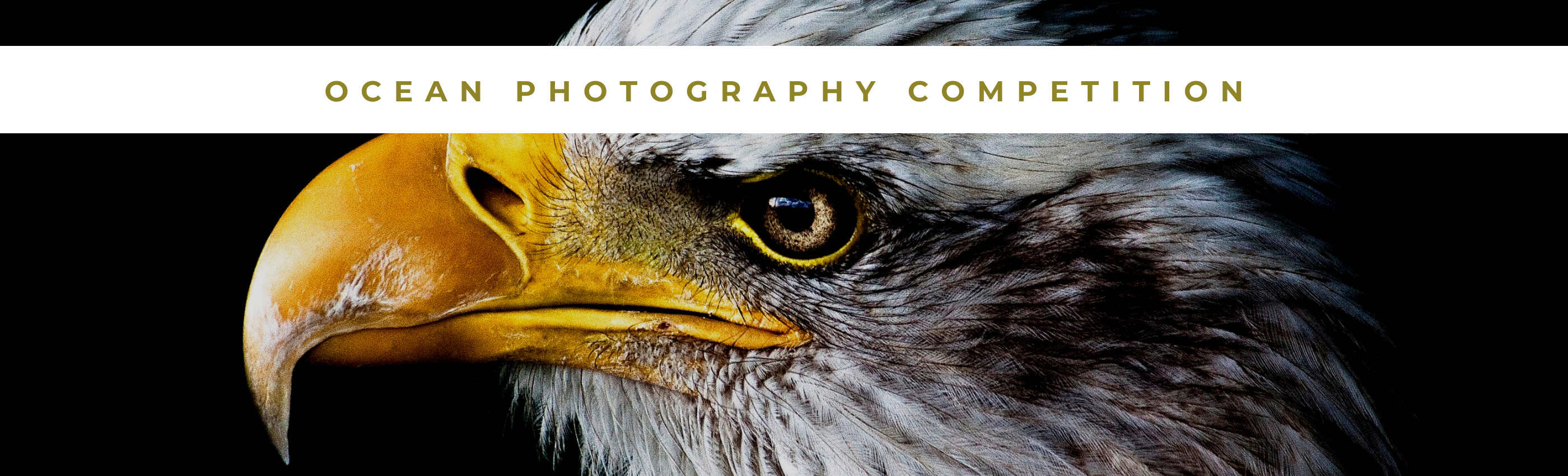 OCEAN Photography Competition - logo