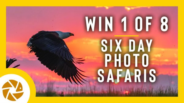 Vision 2020 photo contest by Pangolin Photo Safaris