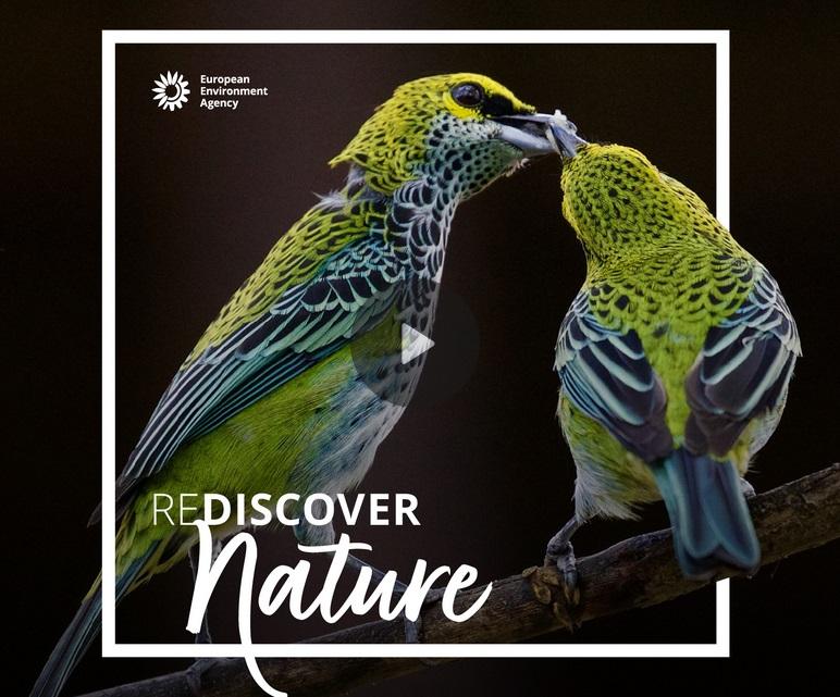 REDISCOVER Nature 2020 - logo