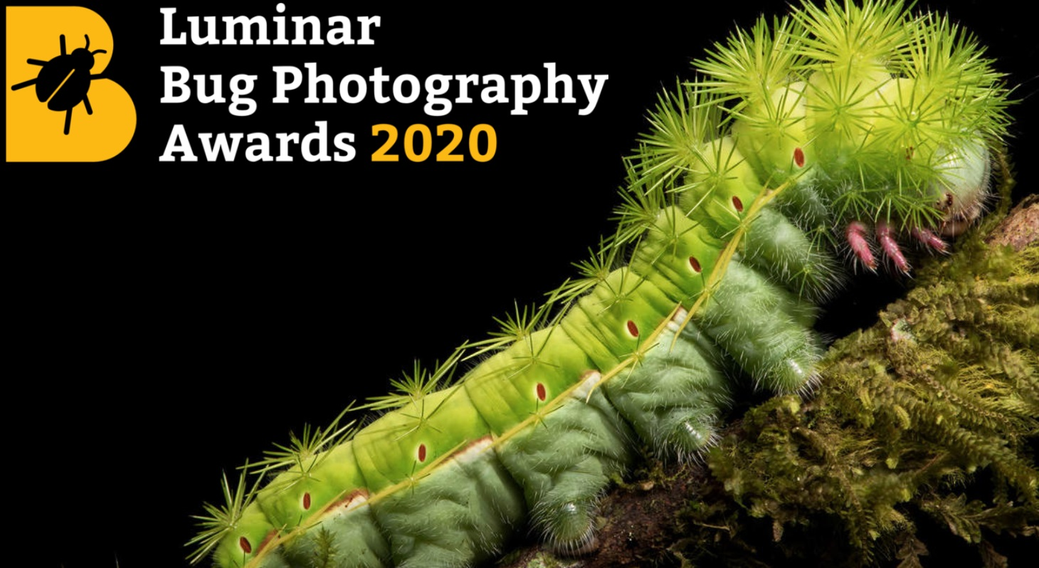 Luminar Bug Photography Awards 2020 - logo