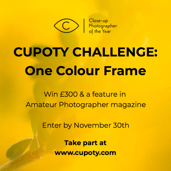 CUPOTY CHALLENGE: One Colour Frame