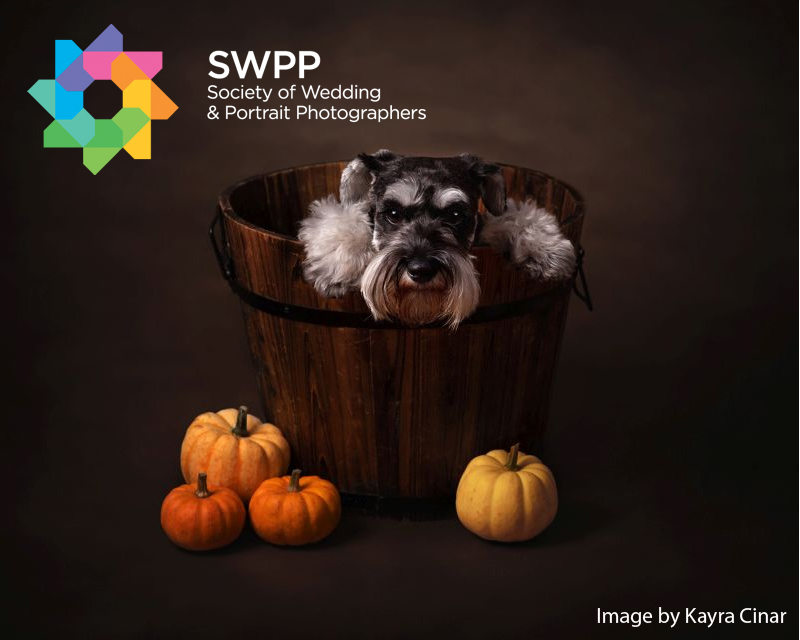 SWPP Autumnal Portraits Photography Competition - logo