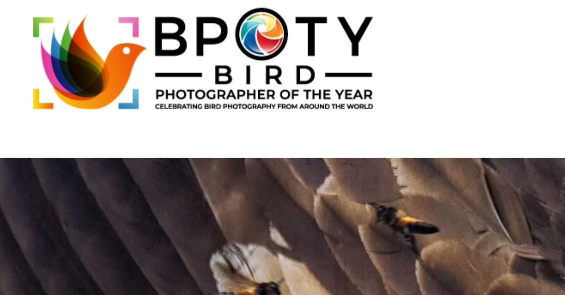 Bird Photographer of the Year 2021 - logo