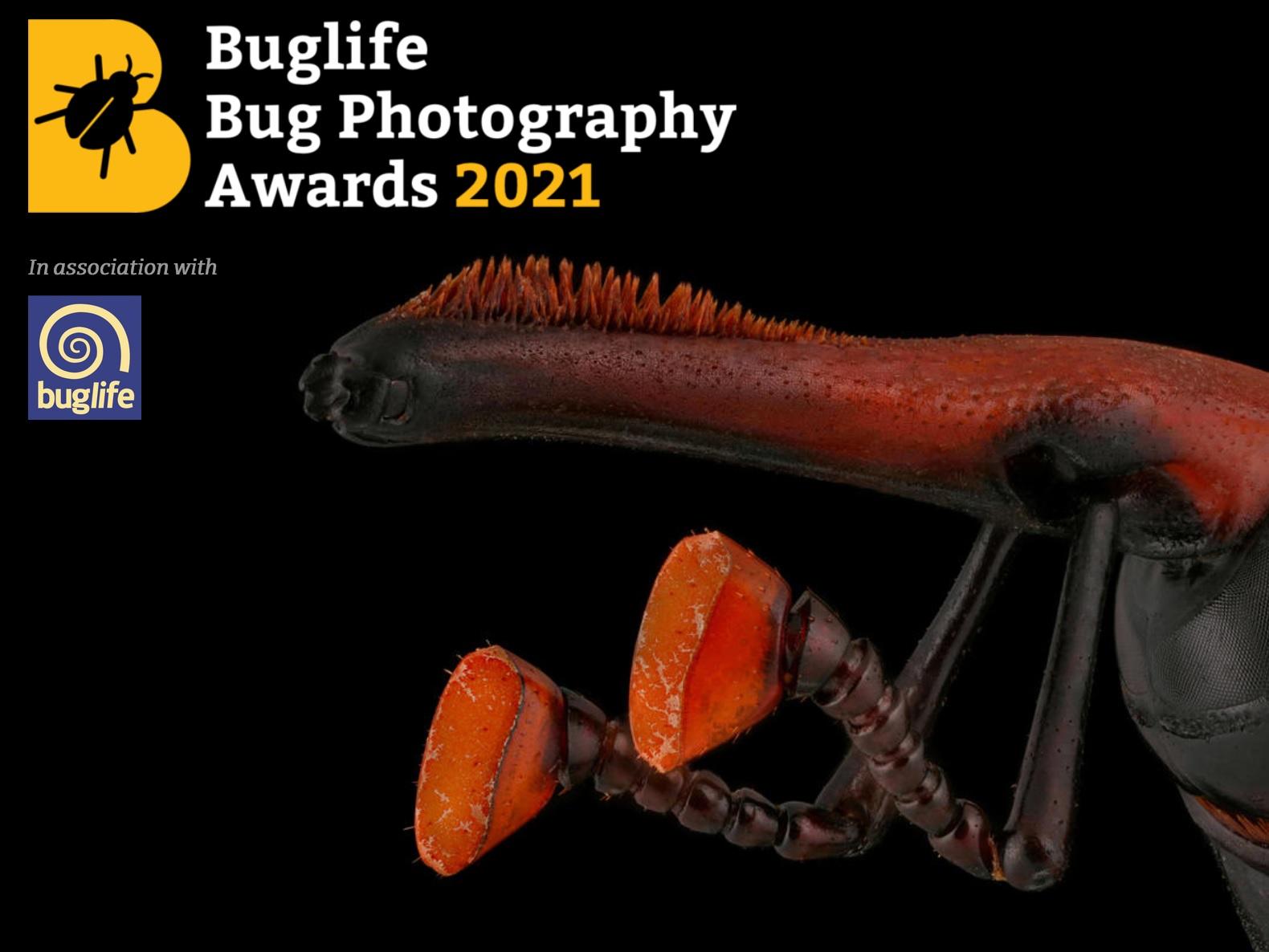 Bug Photography Awards 2021 - logo