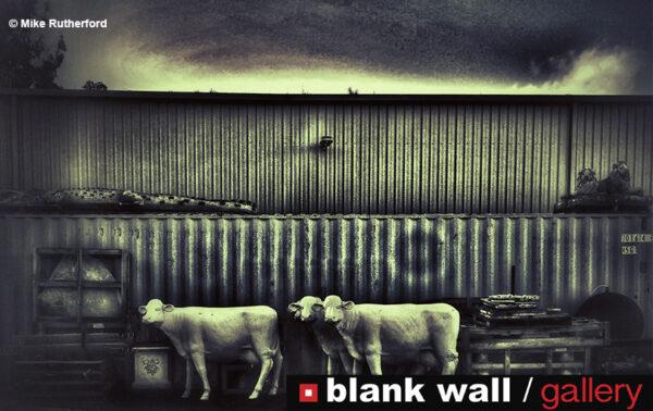 Fine Art by Blank Wall Gallery - logo